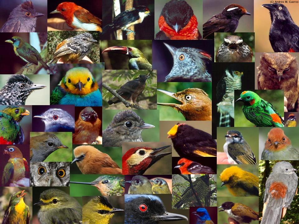 Teorias evolucionistas y hipotesis sobre creacion de la vida